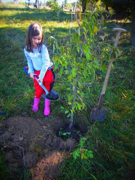 Mädchen mit Spaten beim Baumpflanzen