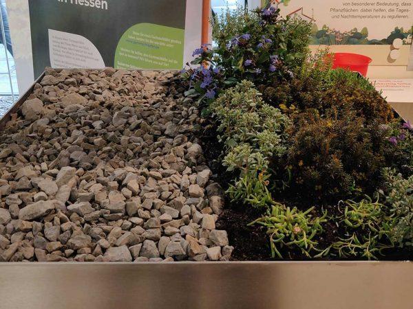 Dachfläche der Mülltonnenbox mit Modell. Links sieht man die Schotterfläche und rechts die bepflanzte Fläche. (Foto: Umweltladen)