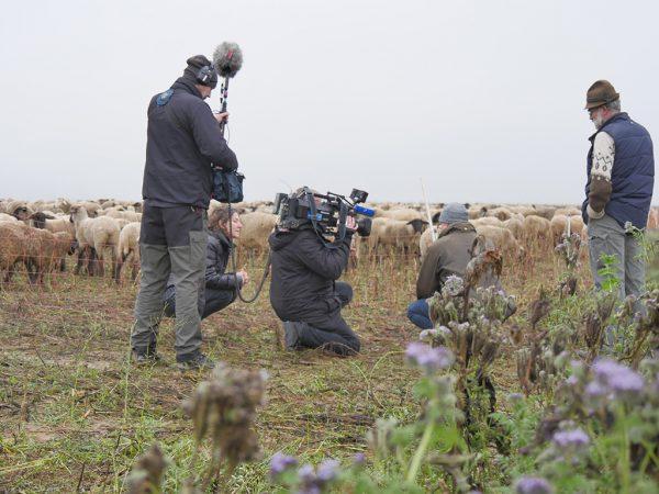 hr-Filmteam beim Dreh, im Hintergrund eine eingezäunte Schafherde