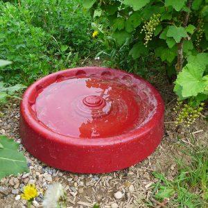 Sollte in keinem Garten fehlen: Vogel-, Insekten- und Kleintiertränke