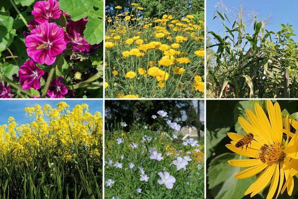 Bunt und nachhaltig - die 6 Kulturen im Saatpaket