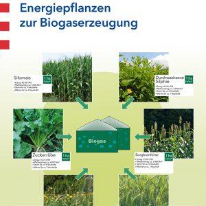 Poster: Energiepflanzen zur Biogaserzeugung