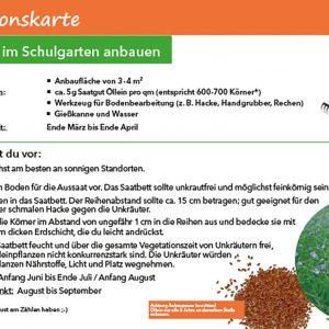 Lernpaket Ölpflanzen, Aktionskarte