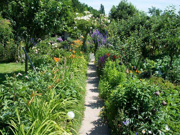Ansicht eines Kleingartens im Sommer. In der Mitte ein Weg, rechts und links Blumenrabatten.