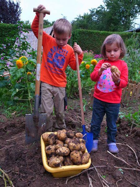 Zwei Kinder helfen bei der Kartoffelernte, zwischen ihnen steht eine Kiste mit Kartoffeln.