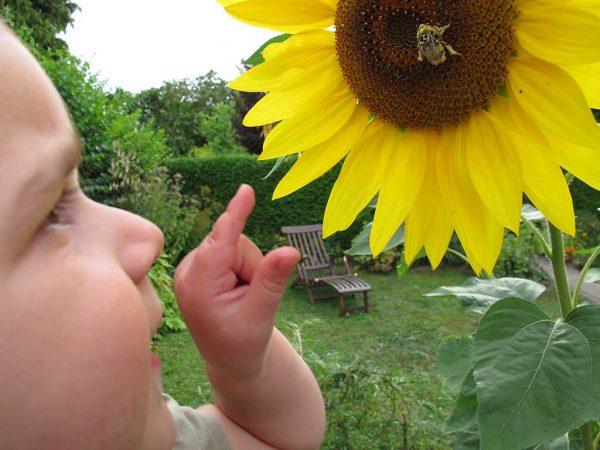 Ein Kind zeigt auf einen Sonnenblumenblüte, auf der eine Biene sitzt.