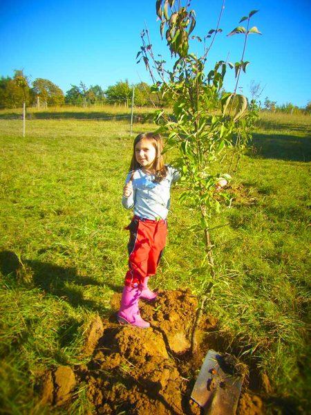 Kind auf einer Wiese mit einem jungen Baum, für den ein Pflanzloch ausgehoben wurde