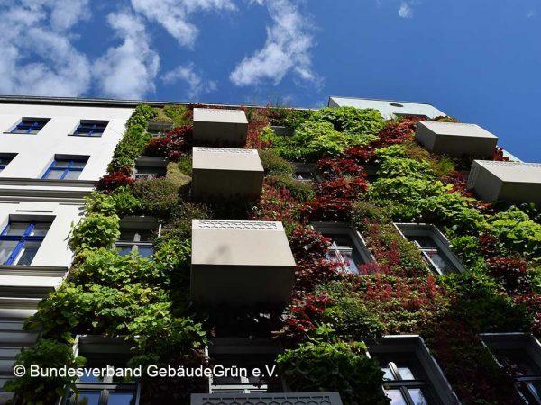 Fassadenbegrünung an einem mehrstöckigen Wohngebäude