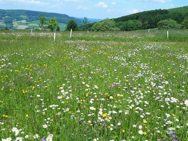 Die Bestandzusammensetzung im Grünland wird maßgeblich von der Nutzungsintensität bestimmt