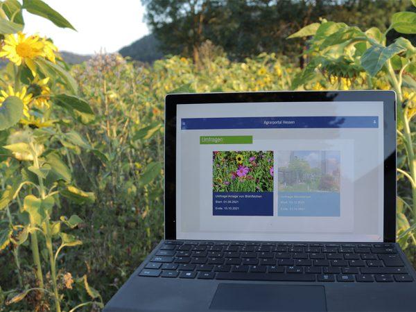 Laptop zwischen Sonnenblumen