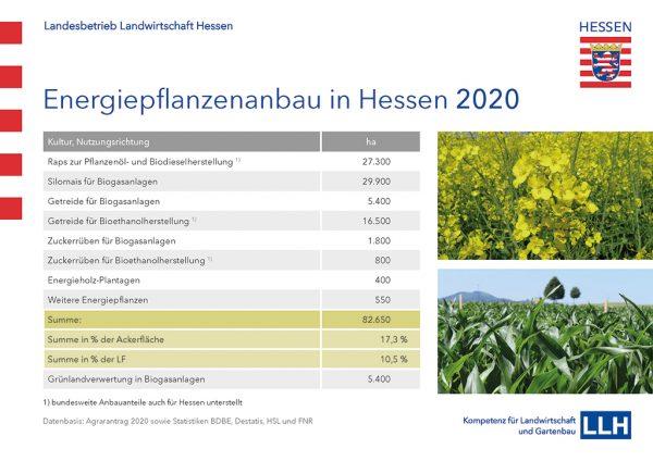 Grafik: Energiepflanzenanbau in Hessen 2020